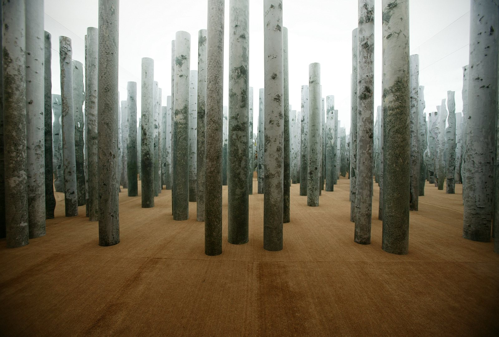 Exhibition Design Forest Without Leaves